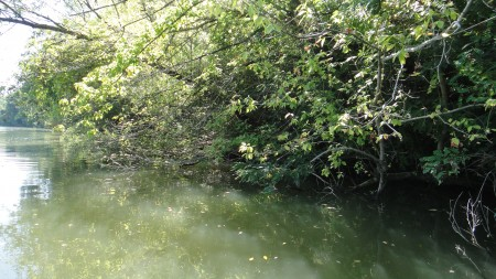 Tiszai horgászhelyünk