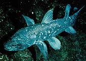 A bojtosúszós hal