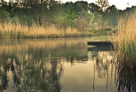 Talán itt a holtág hátsó végében találhatok olyan tiszta vizet, ahol megpróbálhatom a horgászatot, némi halfogás reményében