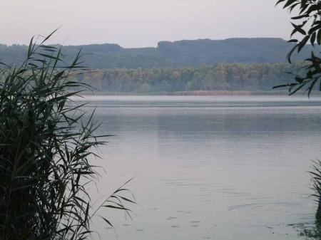 A hajnali Kis-Balaton a nádnyiladékból, ahonnét horgásztam