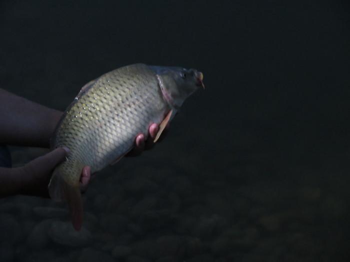 Már a harmadik éjszakai wagglerezésen is túl vagyok. Több lehetőséget kaptam a horgászatra, a matchezésre – még ha néha csak egy pár órára van is lehetőségem