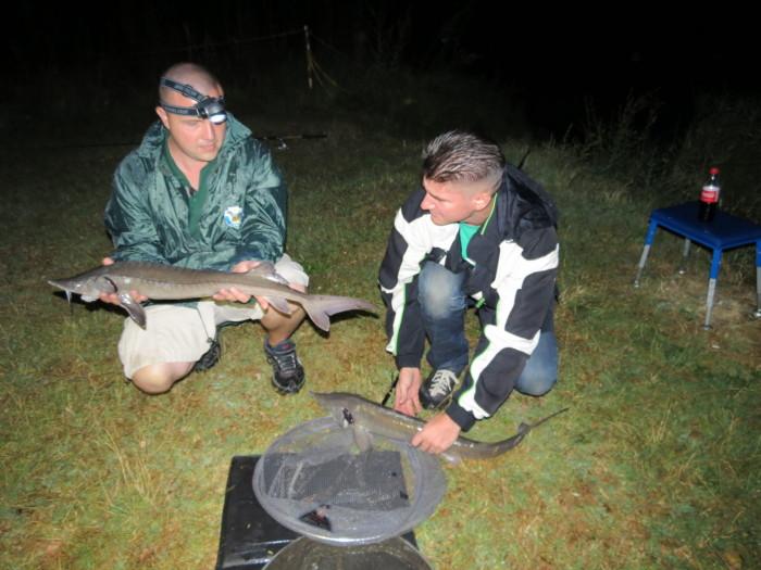 Óriási örömünkre sikerült megmeríteni, és matracra fektetni mindkét lénai tokhalat, és az éjszakai fárasztás minden izgalmas pillanatát rögzíteni. Igazi csemegeként ajánljuk Nézőinknek az infra kamera képeit!