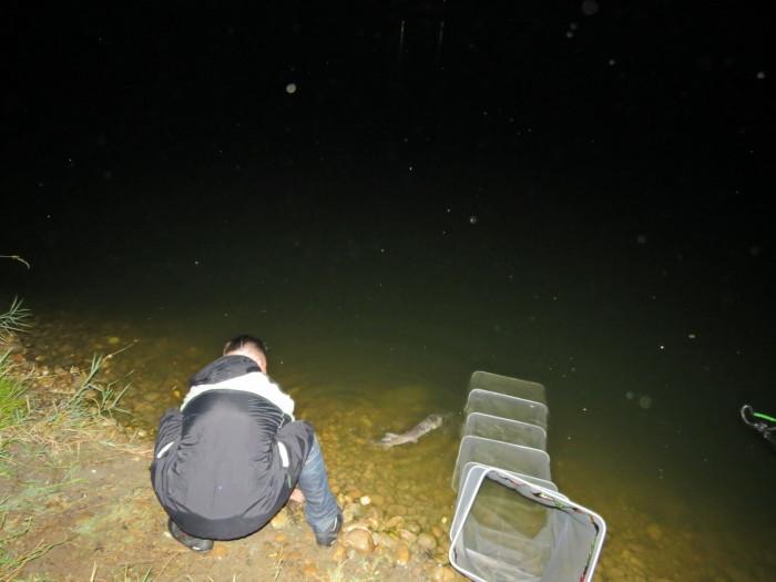 """A """"catch and release"""" szellemében – a fotózás után – azonnal visszaengedtük a tokhalakat, s ők méltóságteljesen eltűntek a sötétben"""