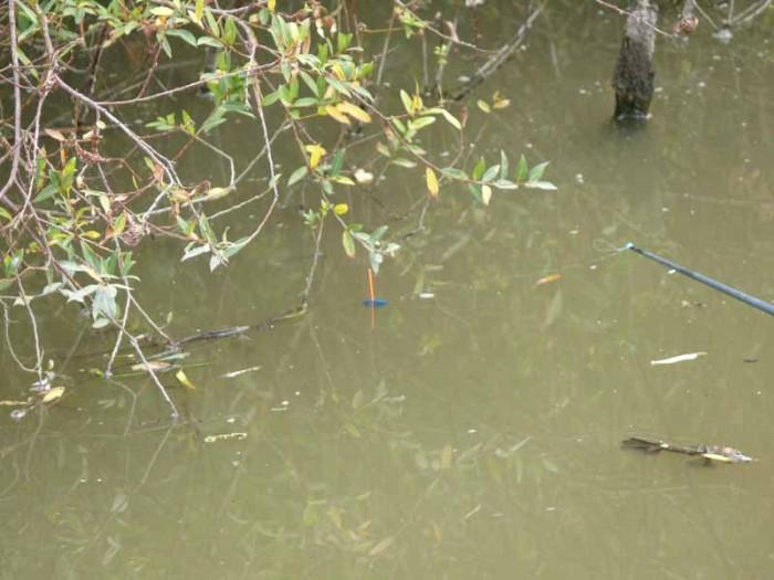 Rakóssal szépen meg tudtam horgászni a szemben lévő bokor szélét