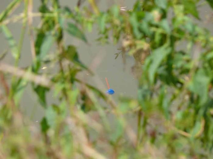 Dzsungelhorgászat – avagy amikor a fotós unatkozik!