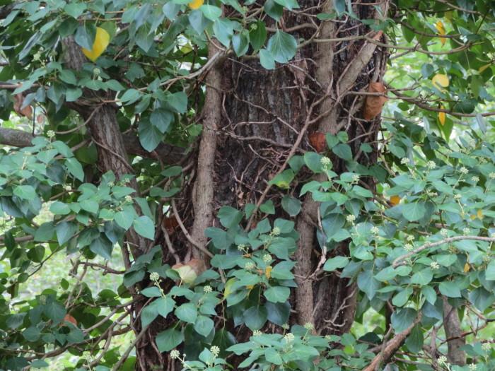A toronyból érdekes erdő részleteket lehet megfigyelni