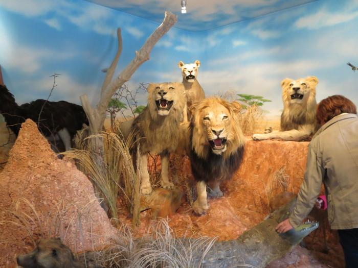 Olyan ritkaságokat tekinthetnek meg itt az érdeklődők, mint például hat egészben preparált oroszlánt, kettő leopárdot, egy krokodilt, vagy több vállmontázsos orrszarvút