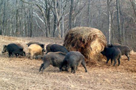 A gazdálkodást alapjaiban meghatározó vadkártérítési szabályok emiatt nem változtak, holott a mezőgazdasági és erdei vadkárok mértéke folyamatosan emelkedik, amelyet csak védekezéssel és a kilövések növelésével tudnak mérsékelni