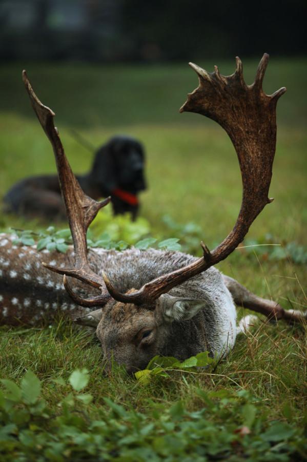 A vadászható nagyvadfajok hasznosítási adatai évek óta bővülnek, ez az elmúlt évben is folytatódott. A tavalyi 400 ezer közeli nagyvadteríték minden idők legmagasabb értéke, a becsült adatok szerint ez a trend folytatódik