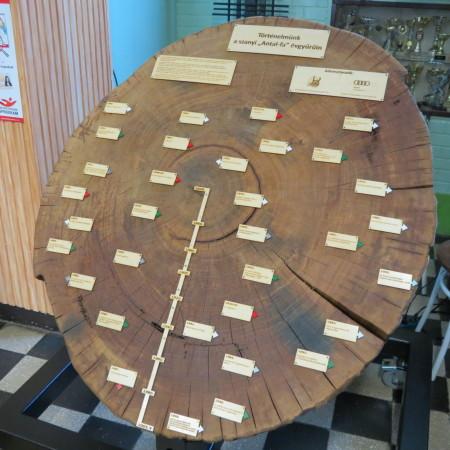 A 167 éves szanyi Antal-fa törzséből készített korong