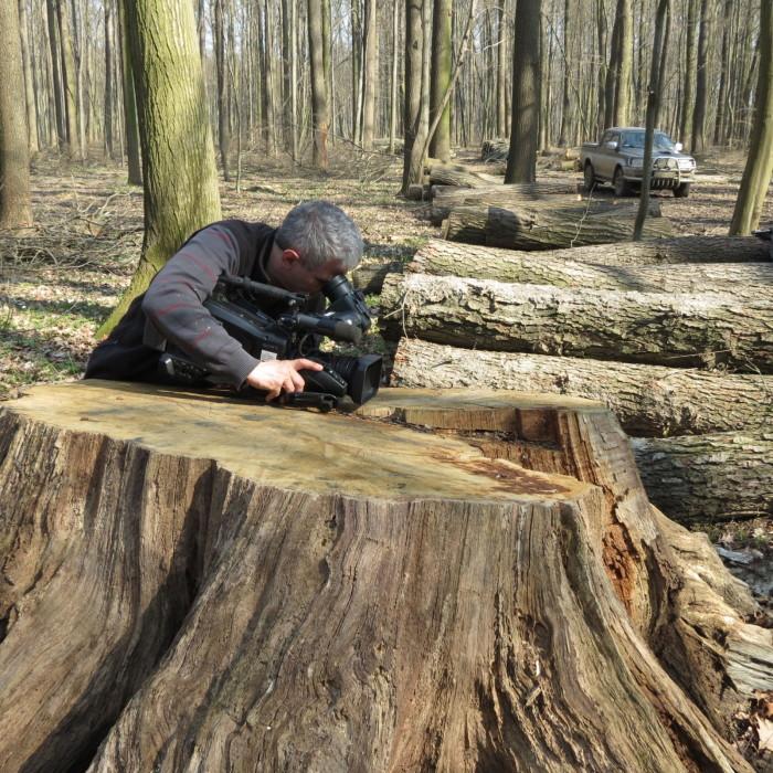 """Operatőrünket makro-felvételek készítésére """"igézte"""" a fa matuzsálem"""
