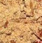 TTX (kukoricapogácsa)